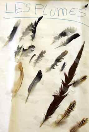 Les oiseaux - Signification des plumes d oiseaux ...